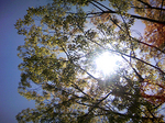 100429_through foliage.jpg